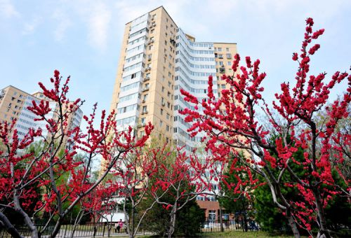 Как найти квартиру в Пекине