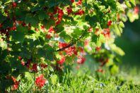 Как правильно высадить кустарники и деревья в саду