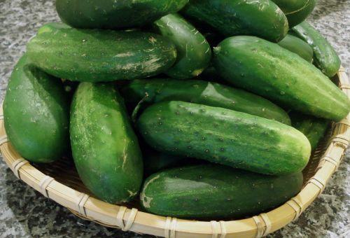 Как выбрать семена огурцов, чтобы получить хороший урожай