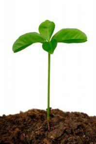 Как влияет кислотность почвы на урожай