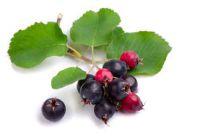 Выращивание и полезные свойства ирги от Greensad