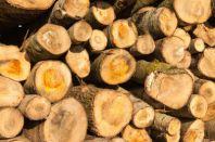 Вырубка деревьев на стройплощадке – нюансы работ