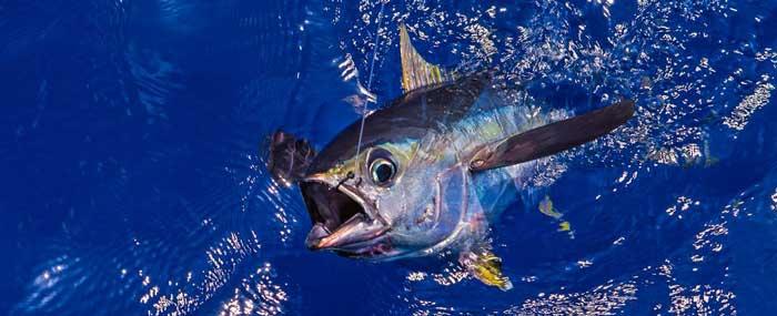 zakazat rybalku na tuna kipr